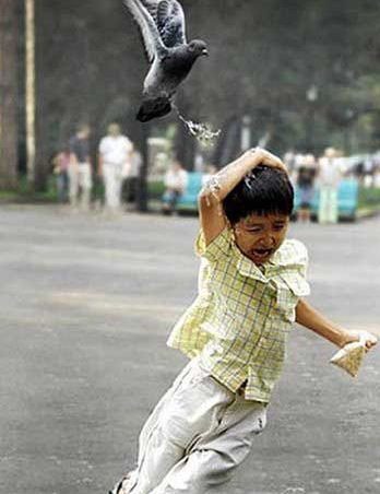 pigeon_poops_on_kid-12419